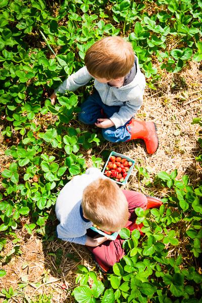 strawberries-7