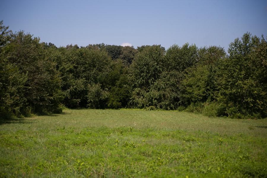 the grove-3