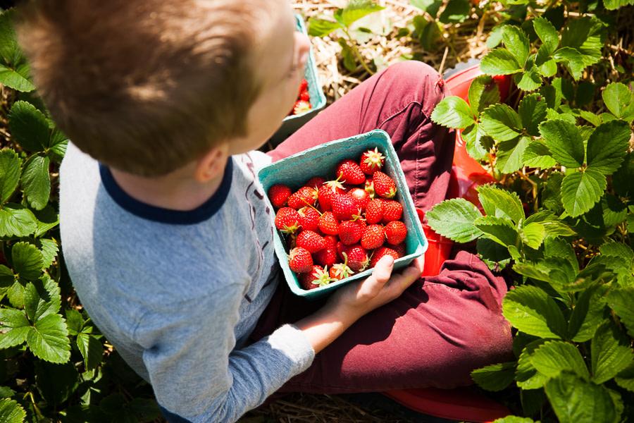 strawberries-8
